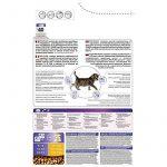 Aliment pour chaton ; faire des affaires TOP 2 image 2 produit