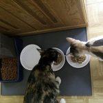 Alimentation humide chat - comment acheter les meilleurs modèles TOP 4 image 6 produit