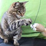 Amazy Cannes à pêche pour chat – Lot de jouets pour amuser votre chat et animer son quotidien (lot de 4) de la marque Amazy image 4 produit