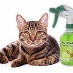 bio-chem Spray bio anti-odeurs permettant d'éliminer les odeurs d'urine animale (chiens, chats…), 500 ml Neutraliseur d'odeurs biologique et vegan de la marque Biochem image 2 produit