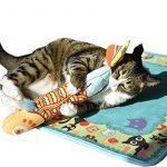 CAT Herbe à chat jouet, Ifoyo Poisson à herbe à chat jouet pour chat 38,1cm Big Crinkle garni de jouet pour chat Cat Taie d'oreiller, Jaune de la marque IFOYO image 3 produit
