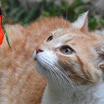 Chat Pêche Angel Cloche et plumes véritables de jeu pour chat & 5Premium Jouet pour chat Lot de extensible & avec ressort Souris, pendentif à grelots amovible, danseurs de & oiseaux Bird, stable et télescopique 97cm de long & de Santa Cruz Club de la ma image 4 produit
