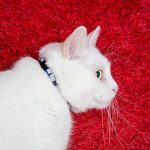 Collier pour chat réfléchissant avec clochette, set de 3 ou 6, solide et sûr, nylon, couleurs mélangées, collier pour animal de compagnie, collier de chat fugueur, par Bemix Pets de la marque Bemix Pets image 6 produit