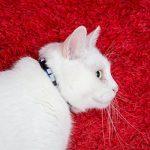 Collier réfléchissant pour chat, notre top 9 TOP 0 image 6 produit
