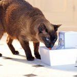 Fontaine pour chat => notre comparatif TOP 3 image 2 produit