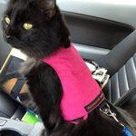 Harnais chaton 3 mois : lecomparatif TOP 4 image 4 produit