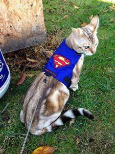 Harnais chaton 3 mois : lecomparatif TOP 5 image 0 produit