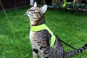 Harnais chaton 3 mois : lecomparatif TOP 6 image 0 produit