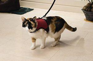 Harnais chaton faire le bon choix TOP 1 image 0 produit