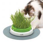 Herbe anti chat, acheter les meilleurs produits TOP 3 image 2 produit