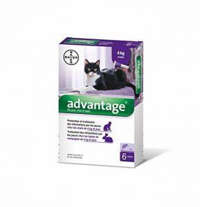Herbe anti chat, acheter les meilleurs produits TOP 4 image 0 produit