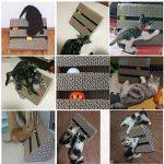 Jouet pour chat avec herbe à chat : votre top 13 TOP 0 image 5 produit