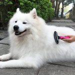Kit de toilettage 3-en-1 pour chats et chiens TaoTronics , Réduit la perte de poils jusqu'à 90% , étrille + peigne + brosse à effiler de la marque TaoTronics image 5 produit