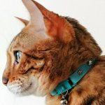 Le comparatif de : Colliers pour chats TOP 3 image 2 produit