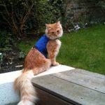 Mynwood Cat Jacket Harnais de sécurité pour chat adulte Bleu de la marque Mynwood Cat Jacket image 4 produit