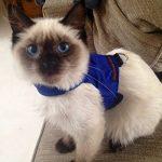 Mynwood Cat Jacket Harnais de sécurité pour chat adulte Bleu de la marque Mynwood Cat Jacket image 5 produit