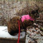 Mynwood Cat Jacket Harnais pour chatons jusqu'à 8 mois Rose de la marque Mynwood Cat Jacket image 3 produit