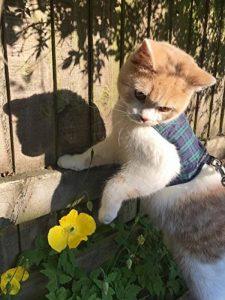 Mynwood Cat Jacket Harnais sécuritaire pour chat adulte Noir Tartan de la marque Mynwood Cat Jacket image 0 produit