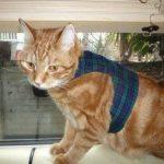 Mynwood Cat Jacket Harnais sécuritaire pour chat adulte Noir Tartan de la marque Mynwood Cat Jacket image 3 produit
