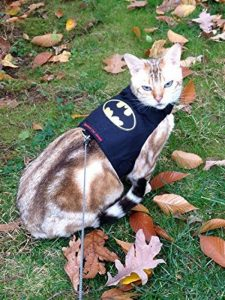 mynwood Harnais pour chat/chaton Batman jusqu'à 8mois–Escape imperméable de la marque Mynwood Cat Jacket image 0 produit
