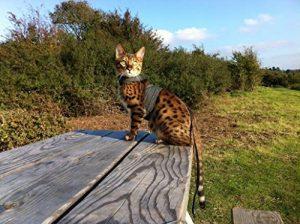 mynwood Harnais pour chat/chaton noir denim jusqu'à 8mois–Escape imperméable de la marque Mynwood Cat Jacket image 0 produit