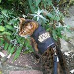 mynwood Harnais pour chat/chaton Star Wars jusqu'à 8mois–Escape imperméable de la marque Mynwood Cat Jacket image 1 produit