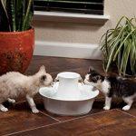 PetSafe - Fontaine à eau en Céramique pour Chats et Chiens Drinkwell Avalon 2L au Design Elégant, avec Filtre à Charbon, Anti-Débris, Facile à Nettoyer - blanc de la marque PetSafe image 3 produit
