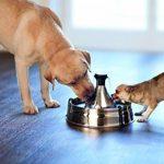 PetSafe - Fontaine à eau pour animaux 360° Drinkwell en Acier Inoxydable Capacité 3.8L, 5 Jets d'eau Cascade, Idéal pour Plusieurs Chiens et Chats de la marque PetSafe image 2 produit