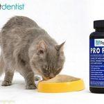 Pro Pet Poudre probiotique pour chiens et chats avec 17 souches bactériennes bénéfiques; Aide à la santé digestive, au système immunitaire, à la santé bucco-dentaire - Fournit 73 milliards de «bonnes» bactéries par portion. 30 portions de la marque Pet De image 5 produit