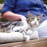 Votre comparatif : Trappe à chat électronique TOP 4 image 3 produit