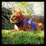 Votre meilleur comparatif : Harnais pour chat avis TOP 2 image 2 produit