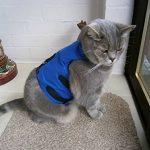 Votre meilleur comparatif : Harnais pour chat avis TOP 2 image 6 produit