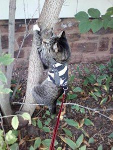 Votre meilleur comparatif : Harnais pour chat avis TOP 3 image 0 produit