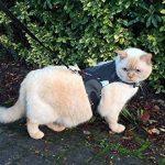 Votre meilleur comparatif : Harnais pour chat avis TOP 3 image 2 produit