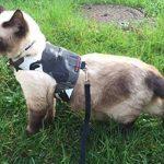 Votre meilleur comparatif : Harnais pour chat avis TOP 3 image 3 produit