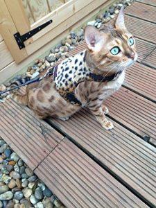 Votre meilleur comparatif : Harnais pour chat avis TOP 4 image 0 produit